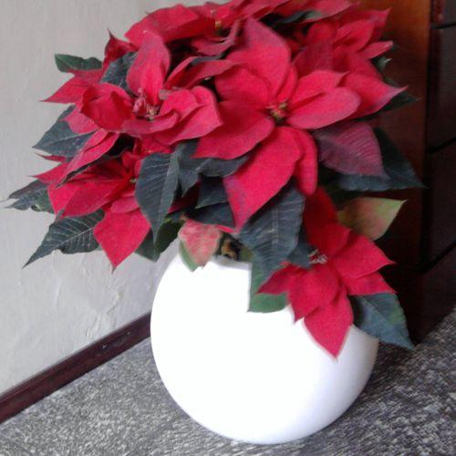 esferas - macetas de fibra de vidrio - fiberland